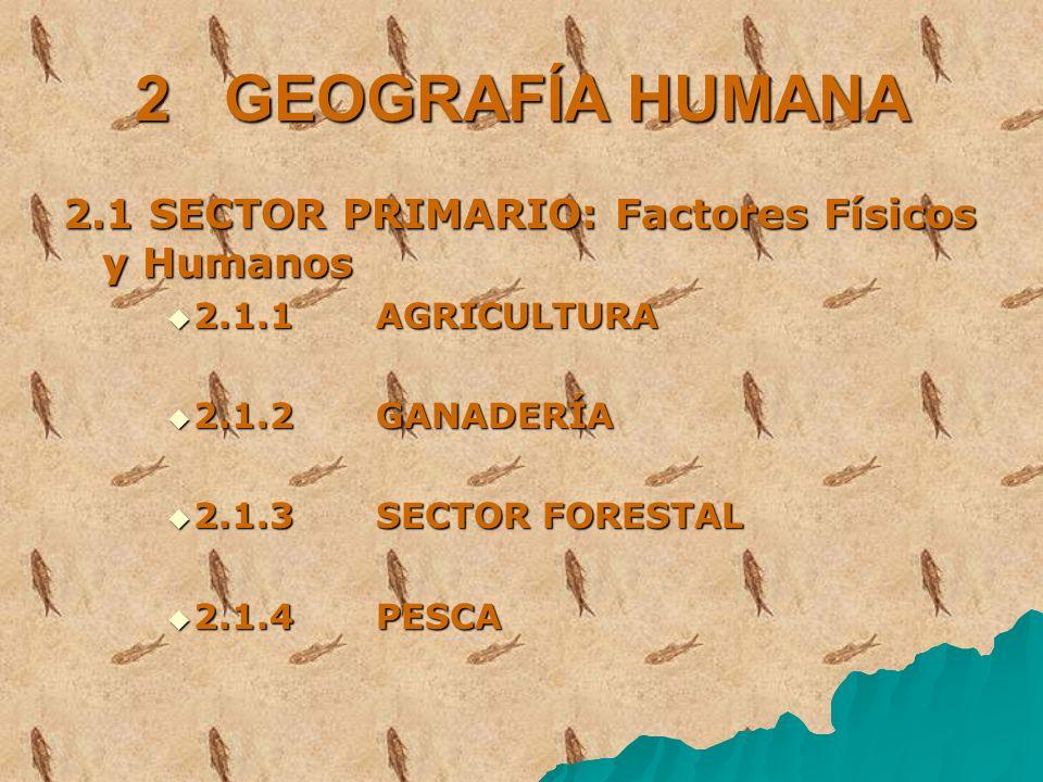 2 GEOGRAFÍA HUMANA 2.1 SECTOR PRIMARIO: Factores Físicos y Humanos 2.1.1 AGRICULTURA 2.1.1 AGRICULTURA 2.1.2 GANADERÍA 2.1.2 GANADERÍA 2.1.3 SECTOR FO