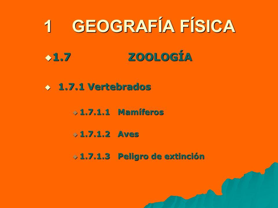 1 GEOGRAFÍA FÍSICA 1.7 ZOOLOGÍA 1.7 ZOOLOGÍA 1.7.1 Vertebrados 1.7.1 Vertebrados 1.7.1.1 Mamíferos 1.7.1.1 Mamíferos 1.7.1.2 Aves 1.7.1.2 Aves 1.7.1.3