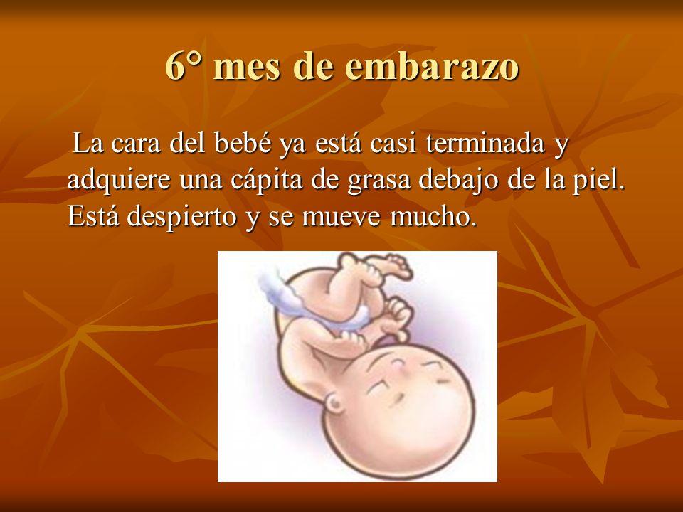 6° mes de embarazo La cara del bebé ya está casi terminada y adquiere una cápita de grasa debajo de la piel. Está despierto y se mueve mucho. La cara