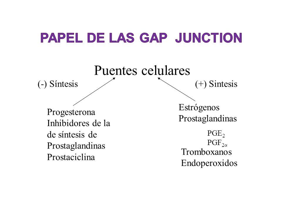 Puentes celulares Progesterona Inhibidores de la de síntesis de Prostaglandinas Prostaciclina Estrógenos Prostaglandinas PGE 2 PGF 2 Tromboxanos Endop