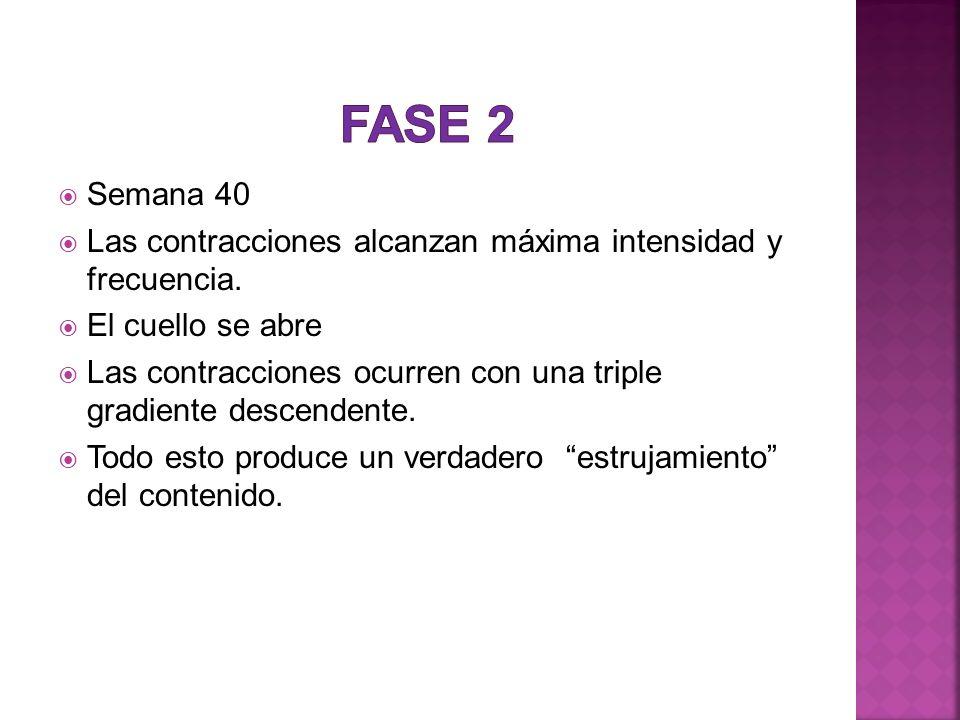 1.-Rotura artificial de membranas de rutina en etapas tempranas de la dilatación 2.-Maniobras de protección del perine y de manejo de la cabeza fetal al momento del parto.