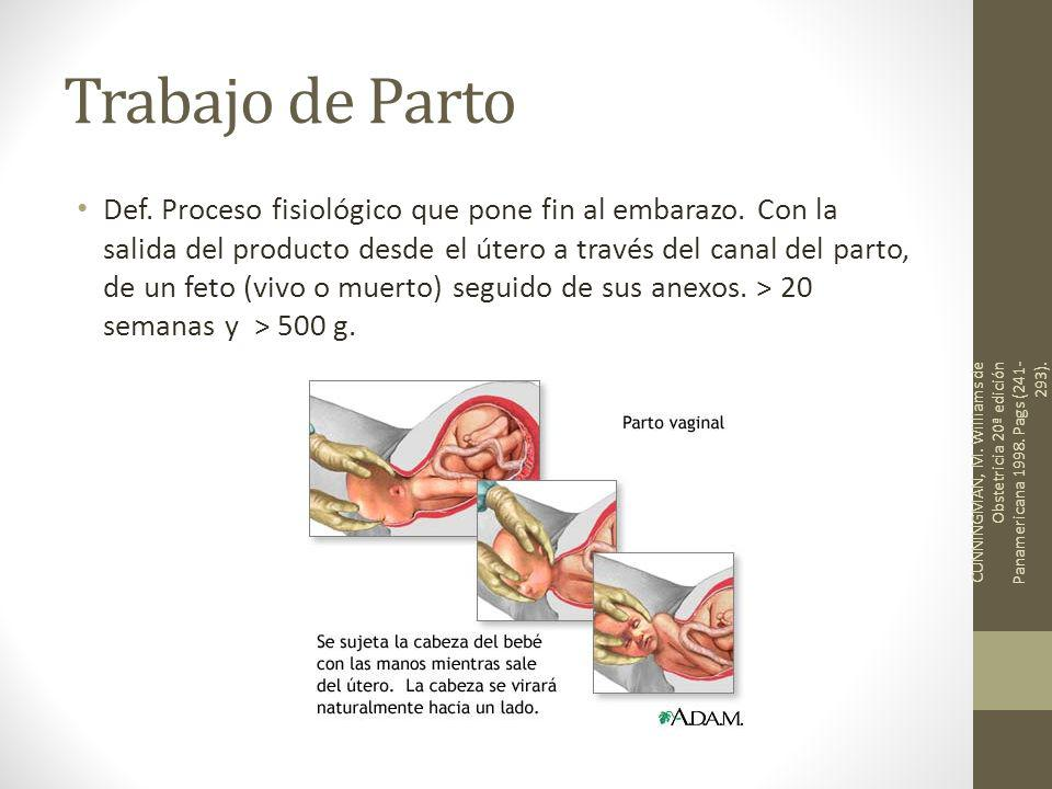 Progresión Mecánica Rotación interna: > frecuente occipucio hacia sínfisis pubiana Orienta los hombros CUNNINGMAN, M.