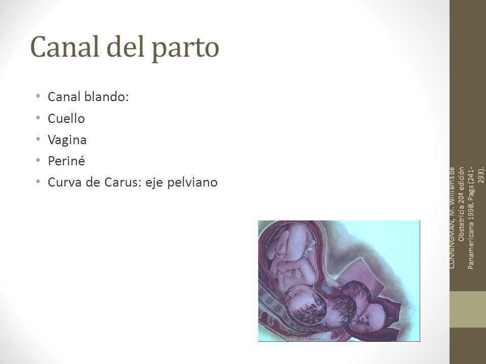 Canal del parto Canal blando: Cuello Vagina Periné Curva de Carus: eje pelviano CUNNINGMAN, M. Williams de Obstetricia 20ª edición Panamericana 1998.