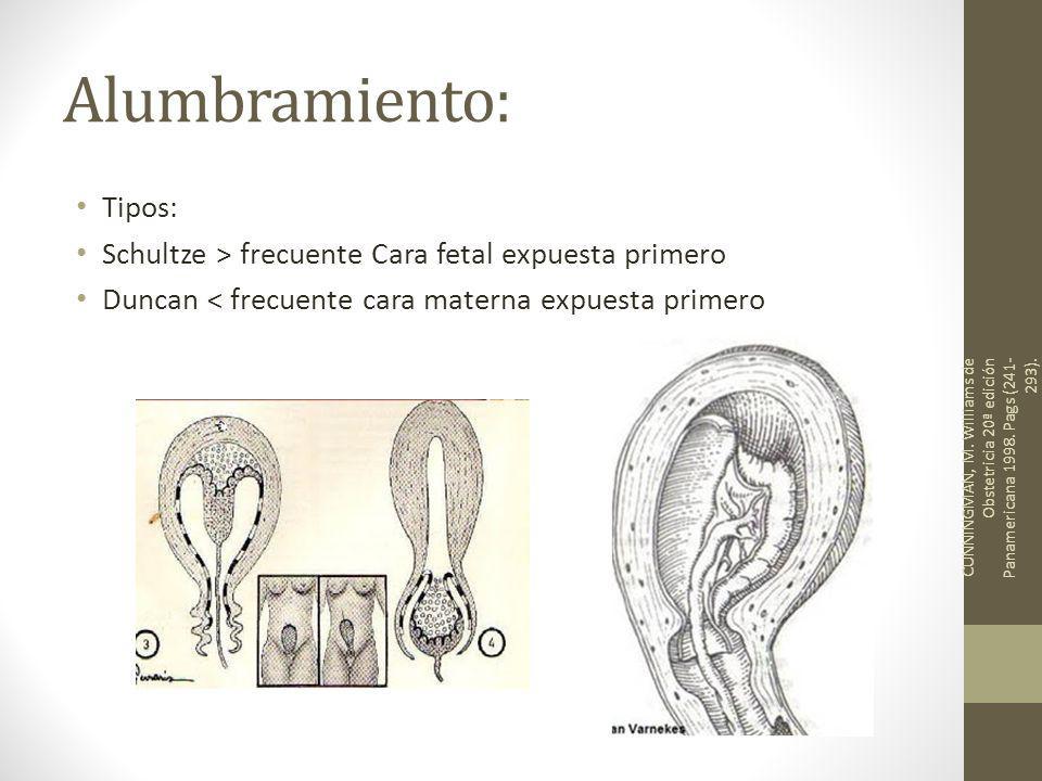 ginecologia revista: