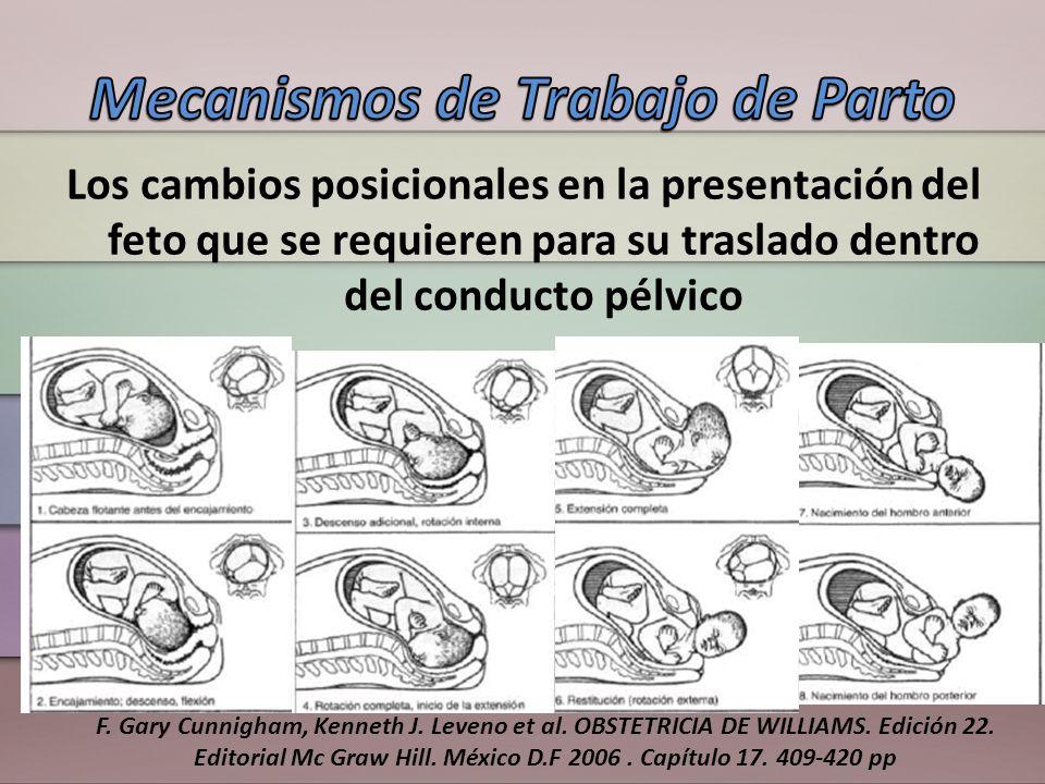 Los cambios posicionales en la presentación del feto que se requieren para su traslado dentro del conducto pélvico F. Gary Cunnigham, Kenneth J. Leven
