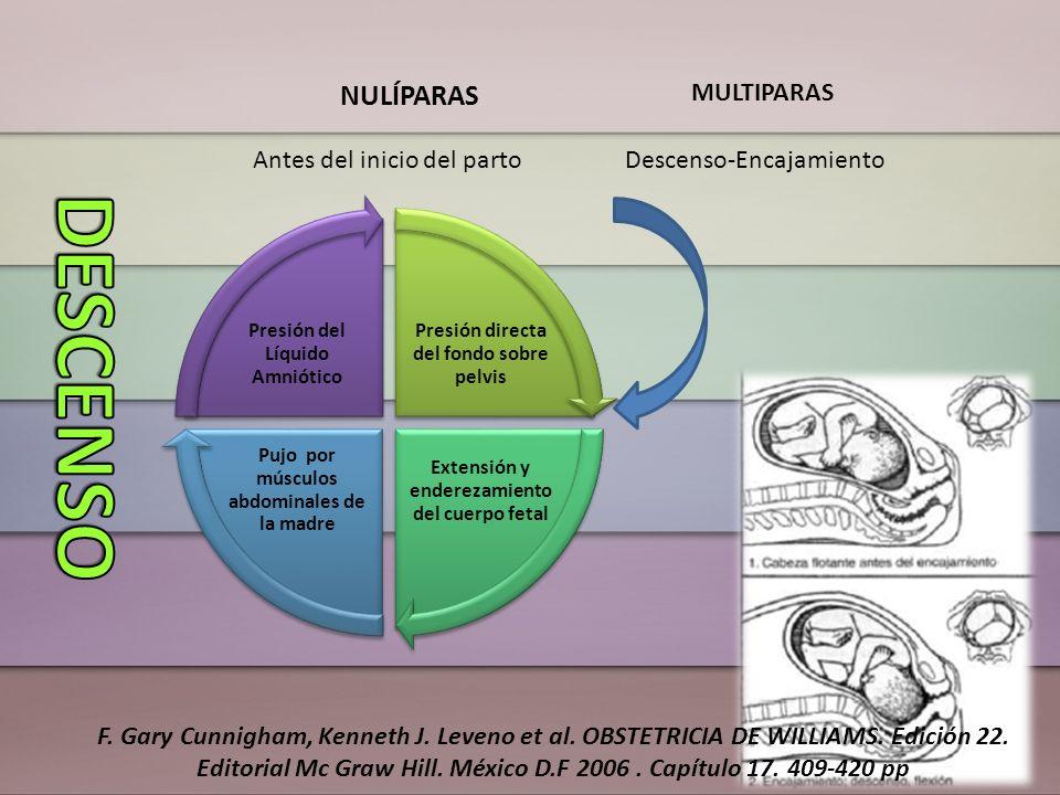 NULÍPARAS MULTIPARAS Antes del inicio del partoDescenso-Encajamiento Presión directa del fondo sobre pelvis Extensión y enderezamiento del cuerpo feta
