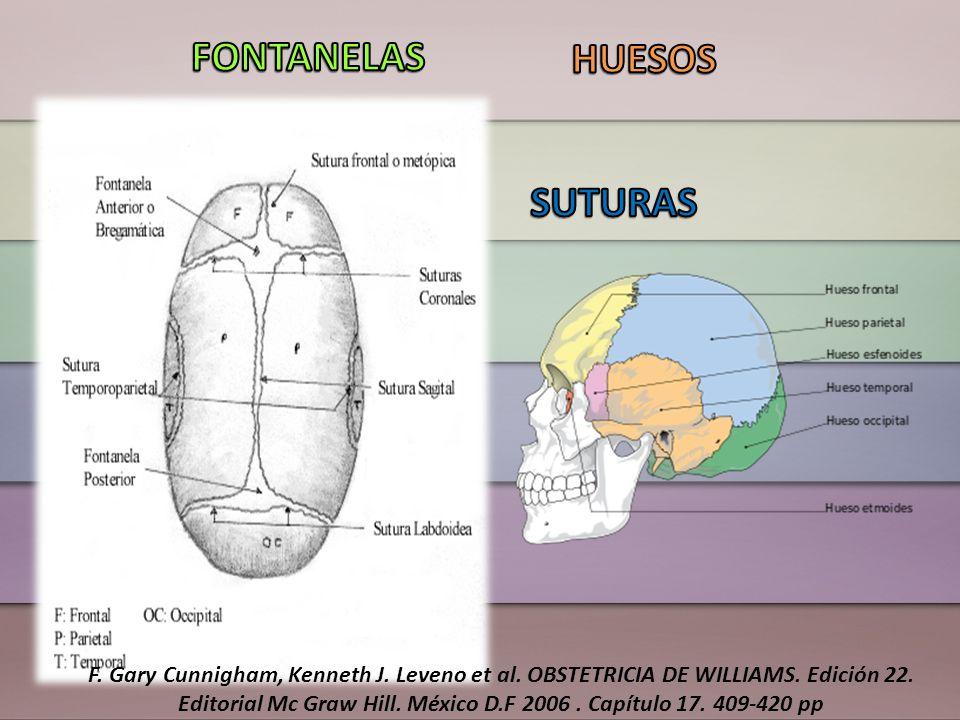 Los cambios posicionales en la presentación del feto que se requieren para su traslado dentro del conducto pélvico F.