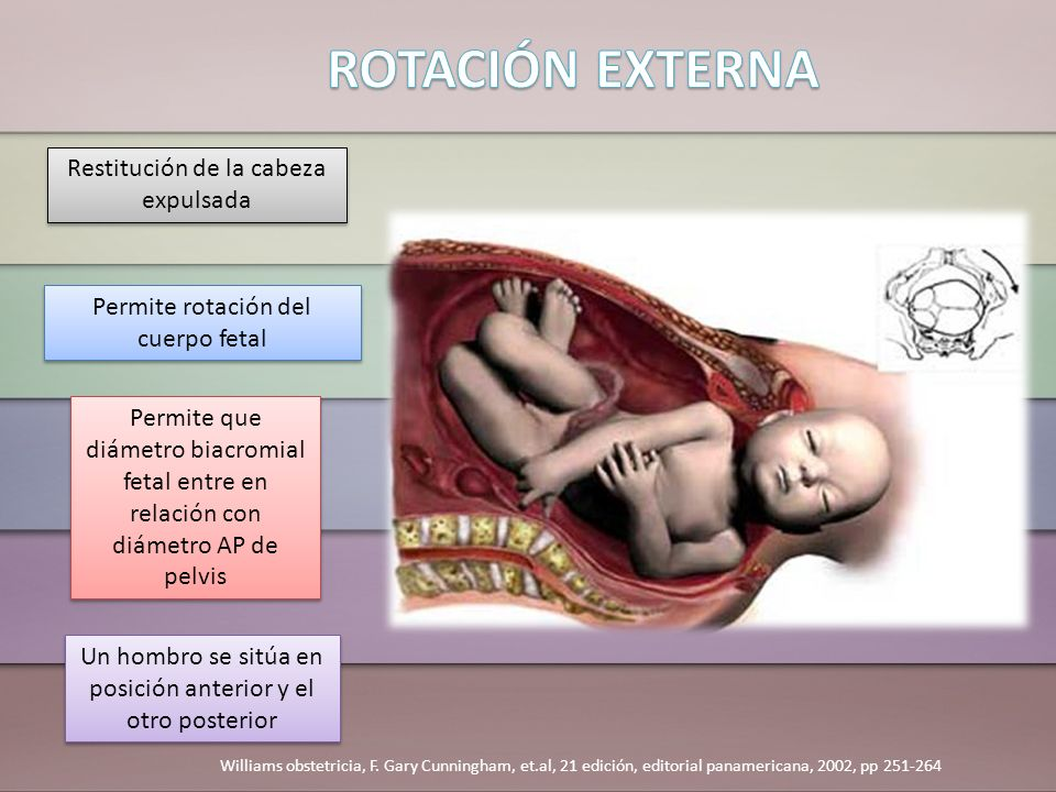 Restitución de la cabeza expulsada Permite rotación del cuerpo fetal Permite que diámetro biacromial fetal entre en relación con diámetro AP de pelvis