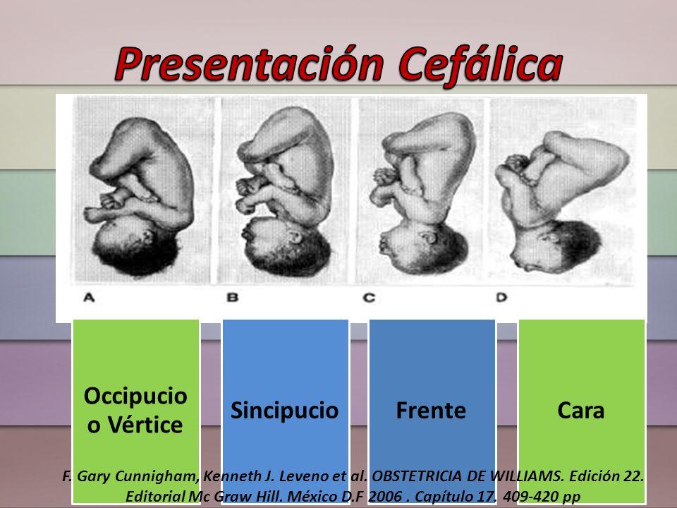 FrancaCompletaPies F.Gary Cunnigham, Kenneth J. Leveno et al.