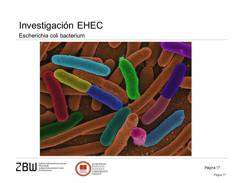 Página 17 Investigación EHEC Escherichia coli bacterium Página 17