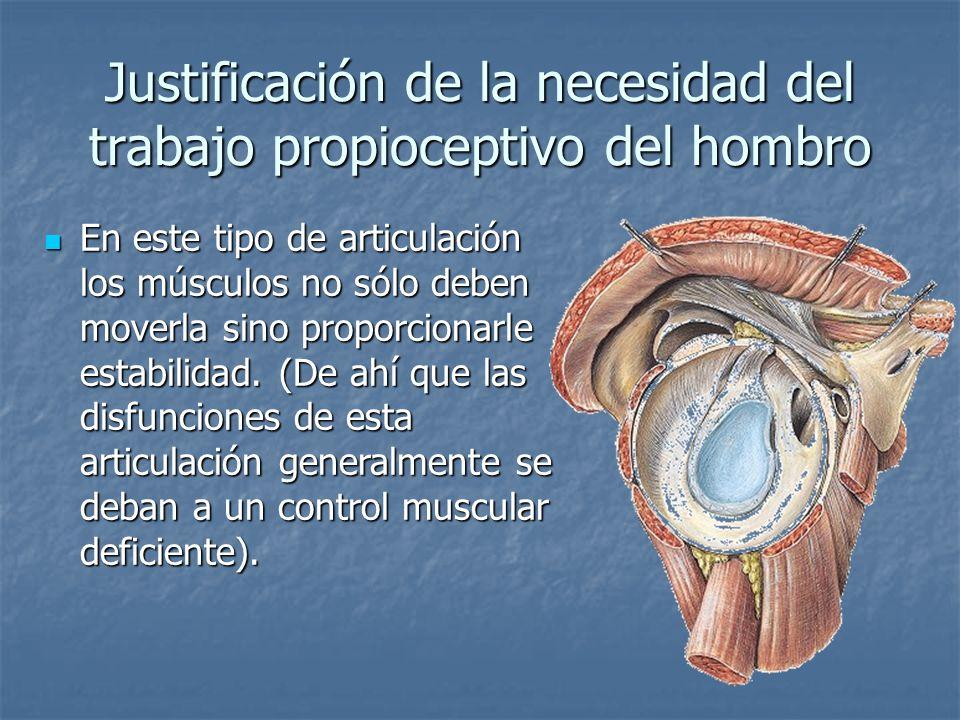 Justificación de la necesidad del trabajo propioceptivo del hombro En este tipo de articulación los músculos no sólo deben moverla sino proporcionarle