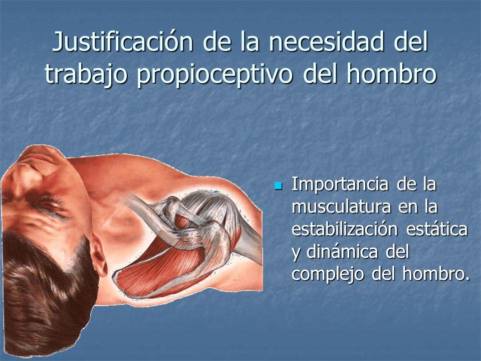 Justificación de la necesidad del trabajo propioceptivo del hombro Importancia de la musculatura en la estabilización estática y dinámica del complejo