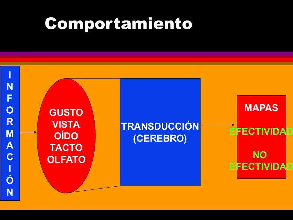 GUSTO VISTA OÍDO TACTO OLFATO INFORMACIÓNINFORMACIÓN TRANSDUCCIÓN (CEREBRO) MAPAS EFECTIVIDAD NO EFECTIVIDAD Comportamiento