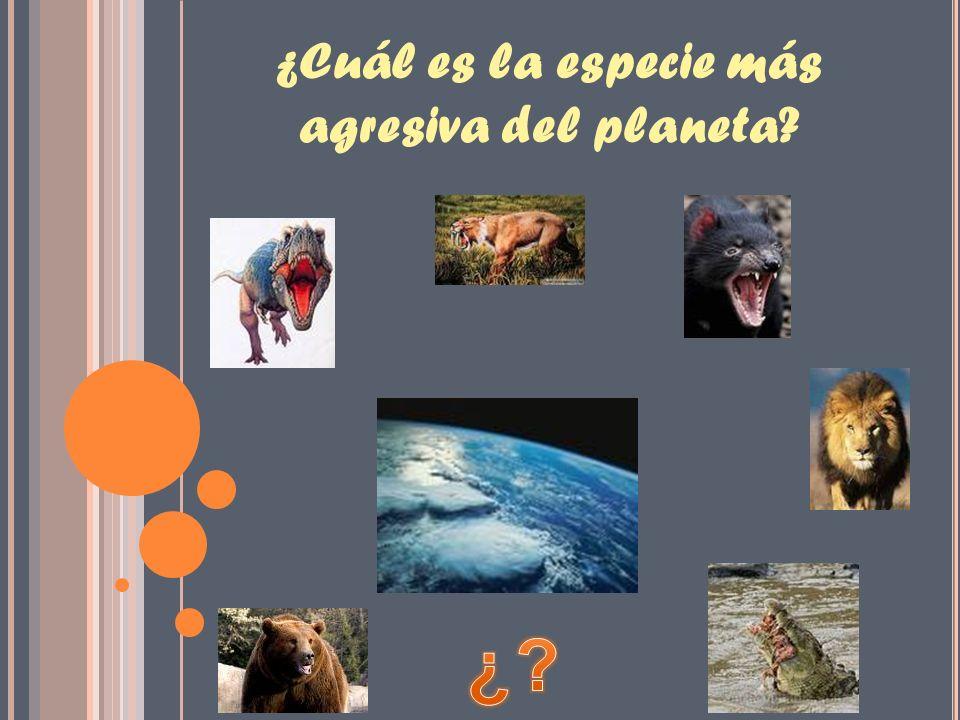 ¿Cuál es la especie más agresiva del planeta?