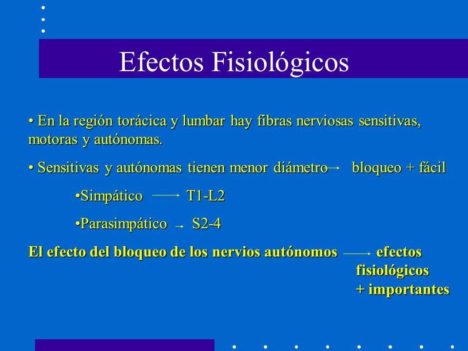 En la región torácica y lumbar hay fibras nerviosas sensitivas, motoras y autónomas.