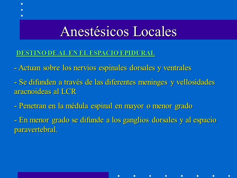 Anestésicos Locales DESTINO DE AL EN EL ESPACIO EPIDURAL - Actuan sobre los nervios espinales dorsales y ventrales - Se difunden a través de las diferentes meninges y vellosidades aracnoideas al LCR - Penetran en la médula espinal en mayor o menor grado - En menor grado se difunde a los ganglios dorsales y al espacio paravertebral.