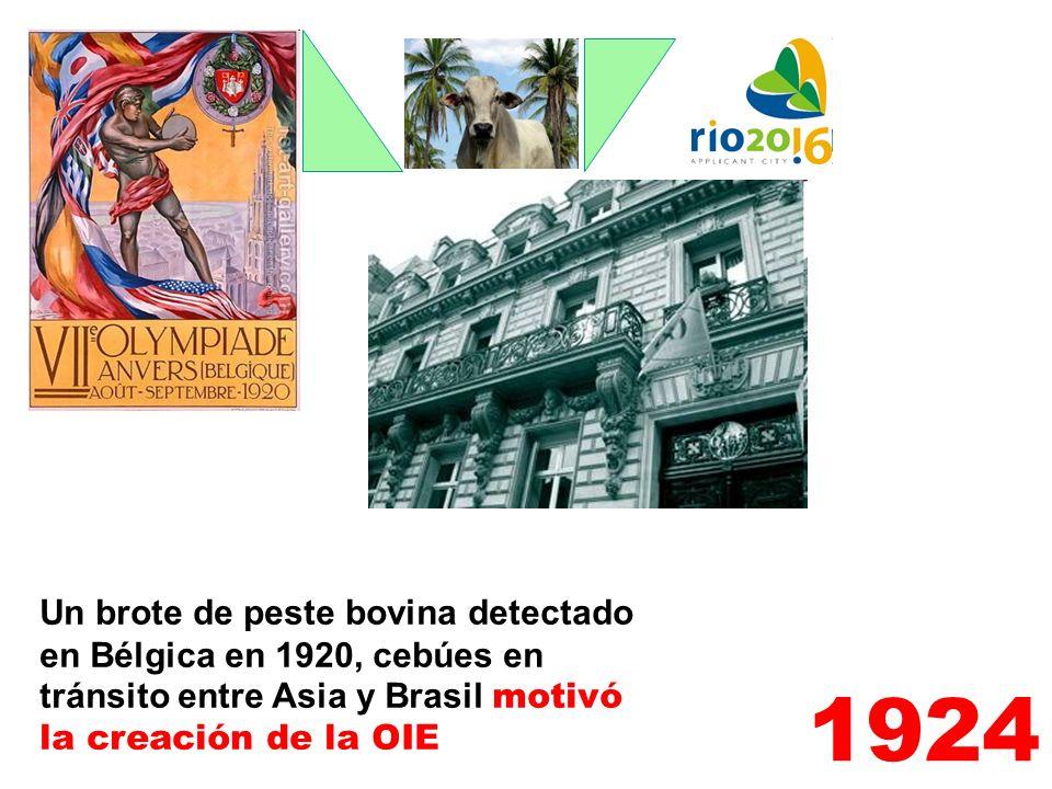 Un brote de peste bovina detectado en Bélgica en 1920, cebúes en tránsito entre Asia y Brasil motivó la creación de la OIE 1924