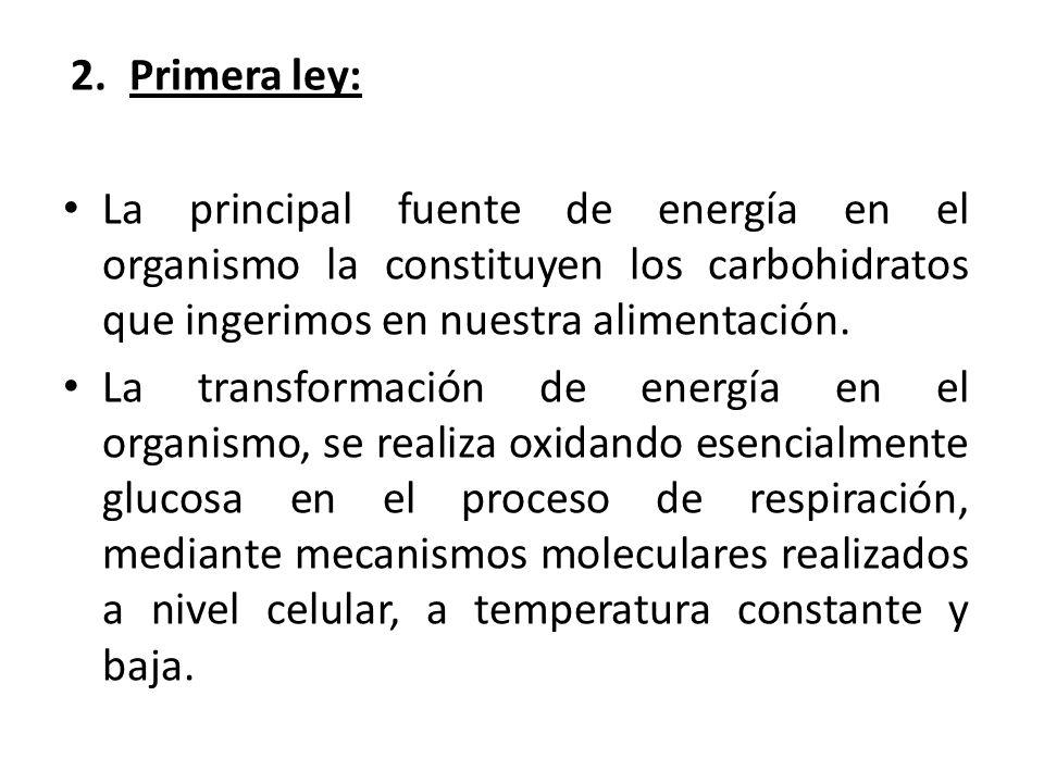 2.Primera ley: La principal fuente de energía en el organismo la constituyen los carbohidratos que ingerimos en nuestra alimentación.