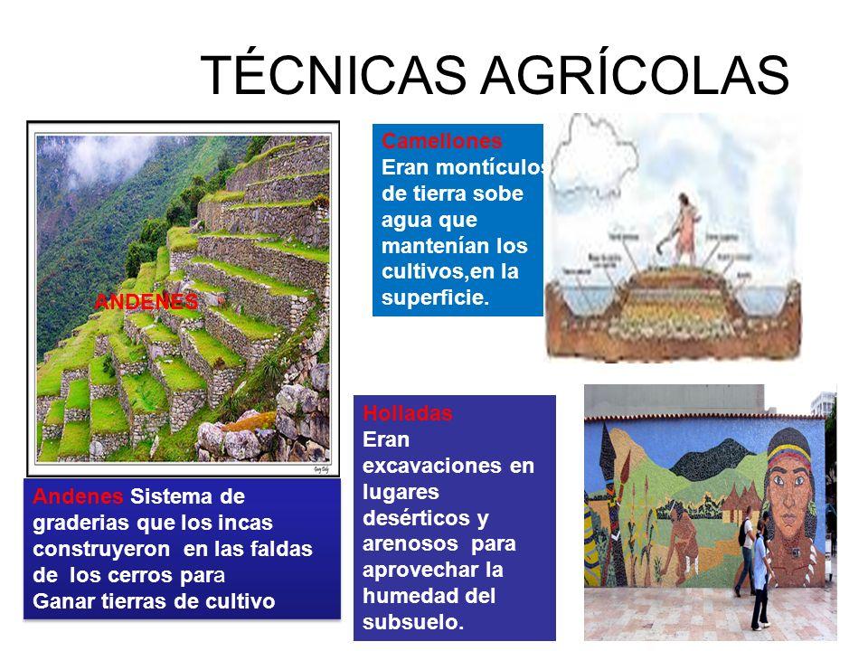 RESPETO Y DOMINIO DE LA NATURALEZA EN LAS 8 REGIONES NATURALES Los incas cultivaron sus productos de acuerdo a los pisos ecológicos, esto es, al rendimiento de las plantas en concordancia con el factor climático altitudinal, y que comprendían desde las partes altas del ande hasta las quebradas de la región yunga y los valles costeños También aprovecharon los recursos marinos como peces, mariscos, algas y aún aves quienes sirvieron como alimento para la población