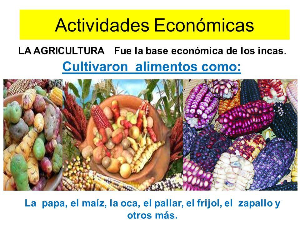 Actividades Económicas Cultivaron alimentos como: La papa, el maíz, la oca, el pallar, el frijol, el zapallo y otros más.