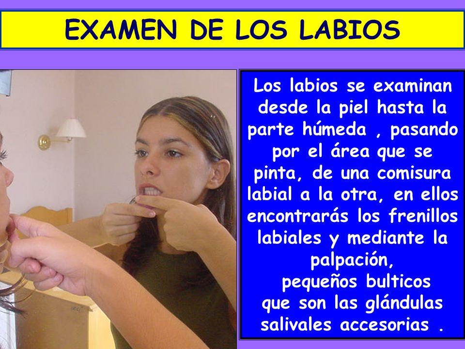 EXAMEN DE LOS LABIOS Los labios se examinan desde la piel hasta la parte húmeda, pasando por el área que se pinta, de una comisura labial a la otra, e