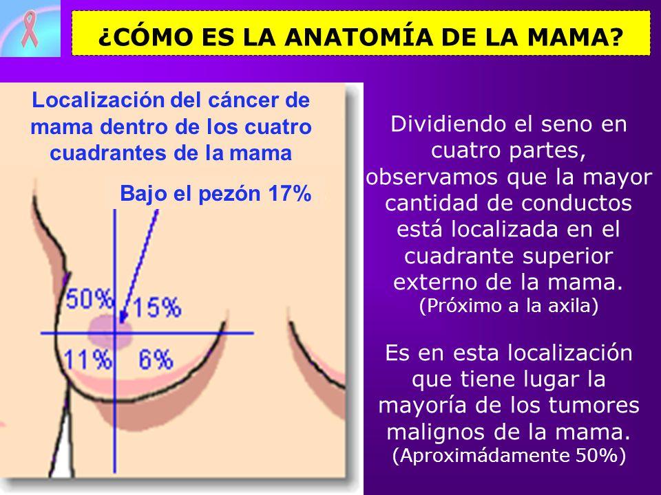 Localización del cáncer de mama dentro de los cuatro cuadrantes de la mama Dividiendo el seno en cuatro partes, observamos que la mayor cantidad de co