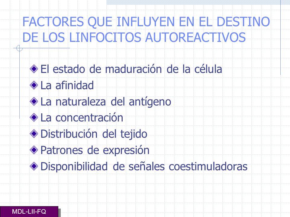 FACTORES QUE INFLUYEN EN EL DESTINO DE LOS LINFOCITOS AUTOREACTIVOS El estado de maduración de la célula La afinidad La naturaleza del antígeno La con