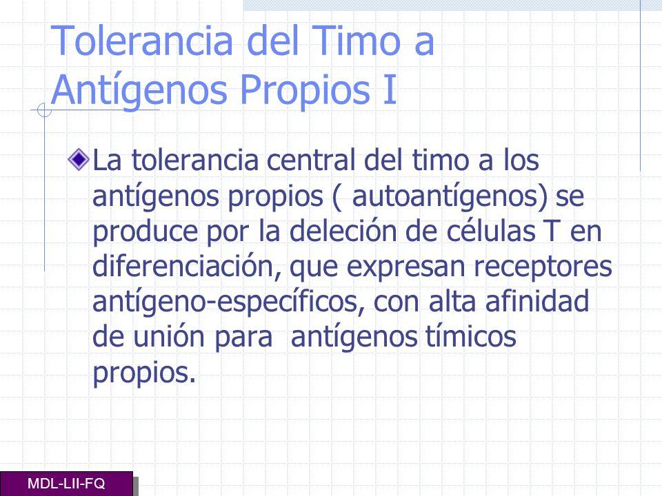 TOLERANCIA DEL TIMO A ANTÍGENOS PROPIOS II Las células T auto reactivas de baja afinidad y las células T, con receptores específicos para antígenos no representados en el interior del timo, maduran y se unen a las células T de la circulación periférica MDL-LII-FQ