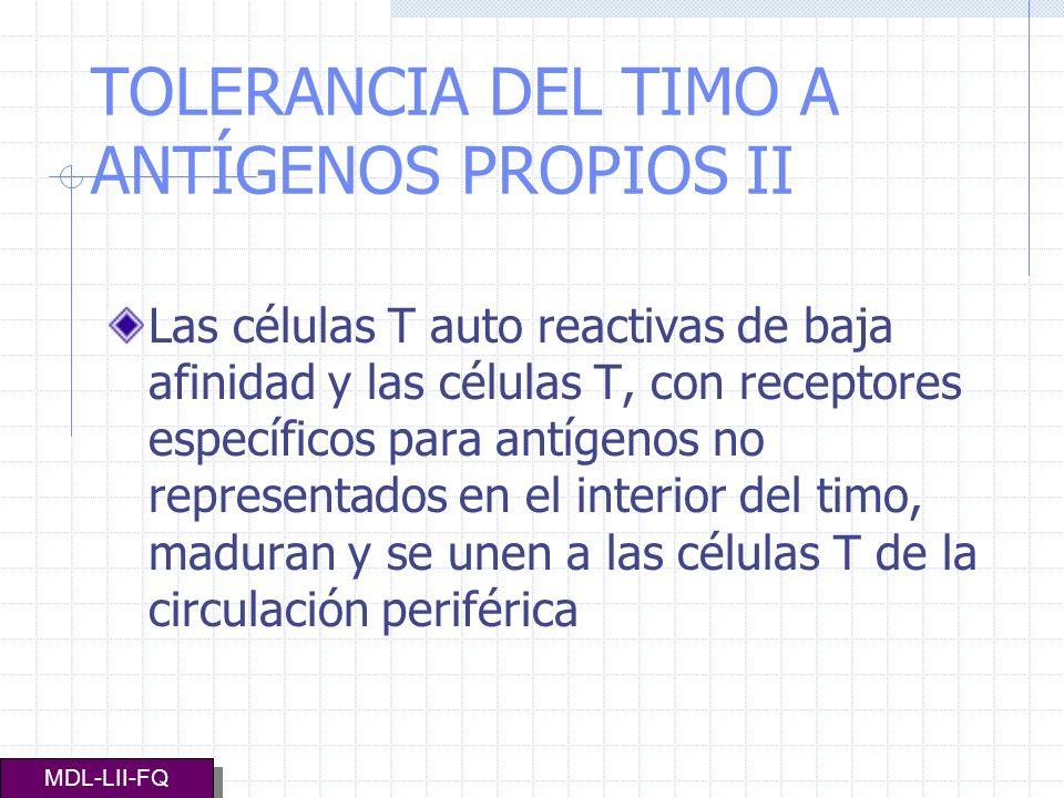 TOLERANCIA DEL TIMO A ANTÍGENOS PROPIOS II Las células T auto reactivas de baja afinidad y las células T, con receptores específicos para antígenos no