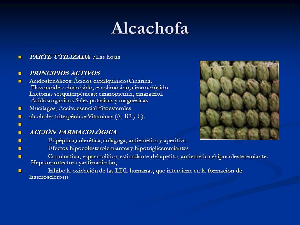 Alcachofa PARTE UTILIZADA : Las hojas PARTE UTILIZADA : Las hojas PRINCIPIOS ACTIVOS PRINCIPIOS ACTIVOS Acidosfenólicos: Ácidos cafeilquínicosCinarina