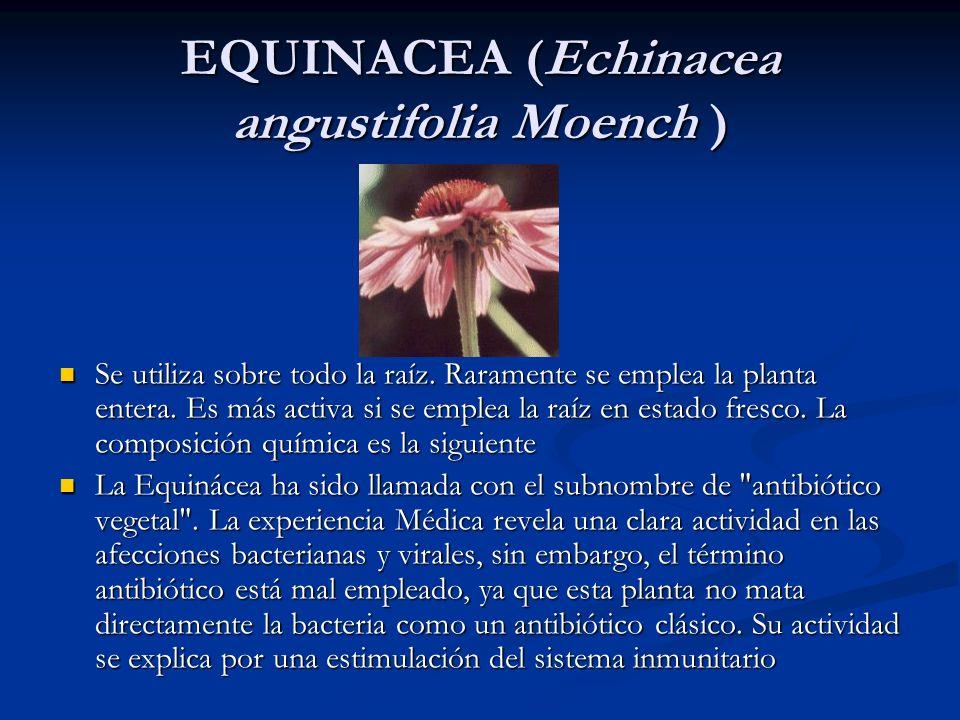 EQUINACEA (Echinacea angustifolia Moench ) Se utiliza sobre todo la raíz. Raramente se emplea la planta entera. Es más activa si se emplea la raíz en