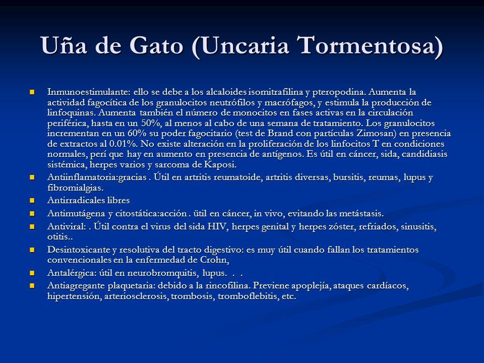 Uña de Gato (Uncaria Tormentosa) Inmunoestimulante: ello se debe a los alcaloides isomitrafilina y pteropodina. Aumenta la actividad fagocítica de los