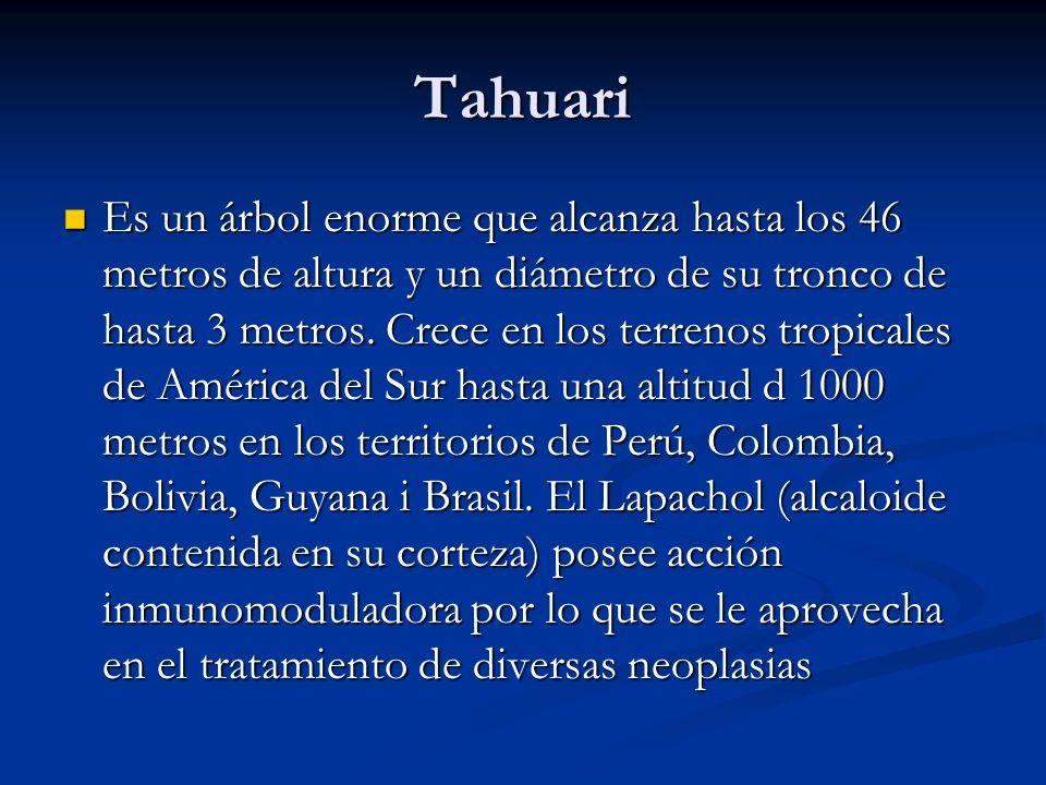 Tahuari Es un árbol enorme que alcanza hasta los 46 metros de altura y un diámetro de su tronco de hasta 3 metros. Crece en los terrenos tropicales de