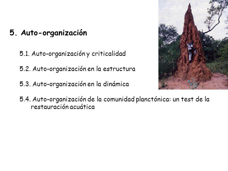 5.Auto-organización 5.1. Auto-organización y criticalidad 5.2.