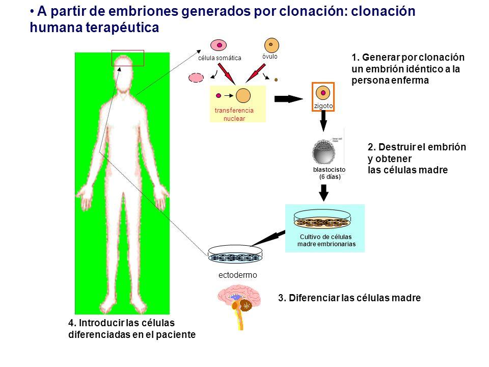 A partir de embriones generados por clonación: clonación humana terapéutica 3. Diferenciar las células madre 1. Generar por clonación un embrión idént