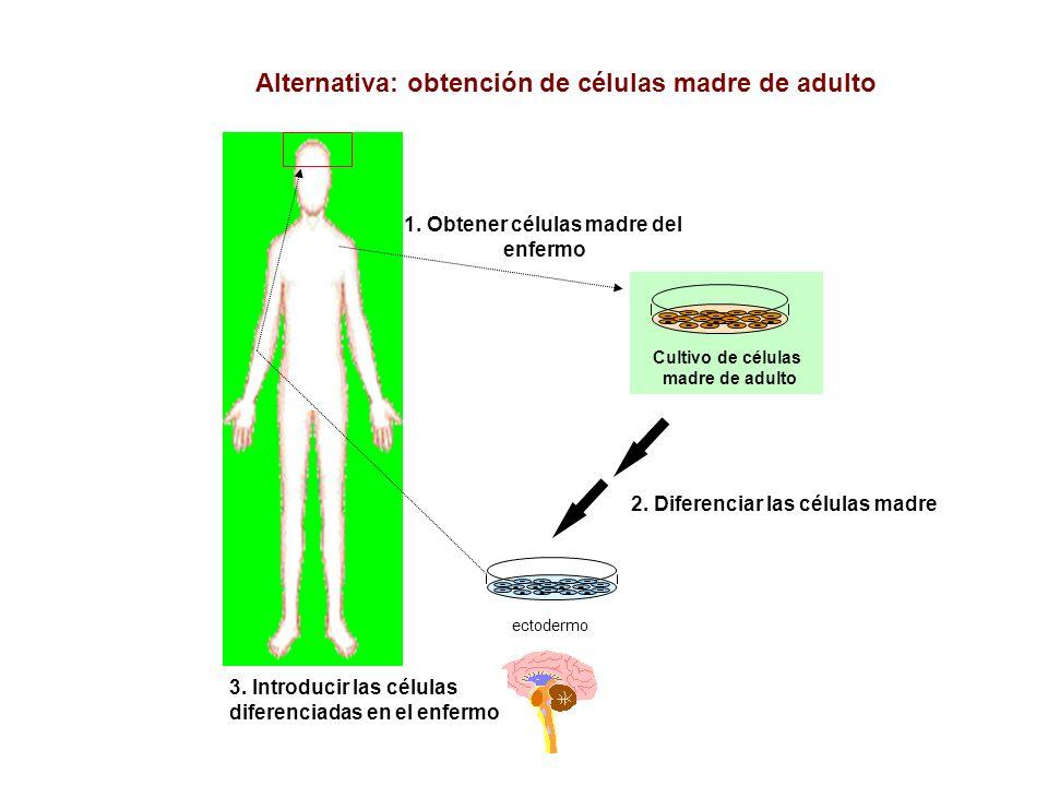2. Diferenciar las células madre 4. Introducir las células sanas en el paciente ectodermo 3. Introducir las células diferenciadas en el enfermo Altern