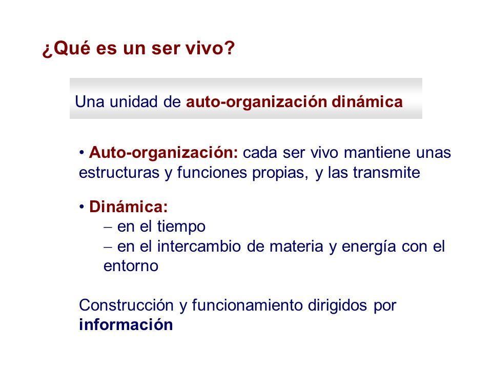 Una unidad de auto-organización dinámica Auto-organización: cada ser vivo mantiene unas estructuras y funciones propias, y las transmite Dinámica: en
