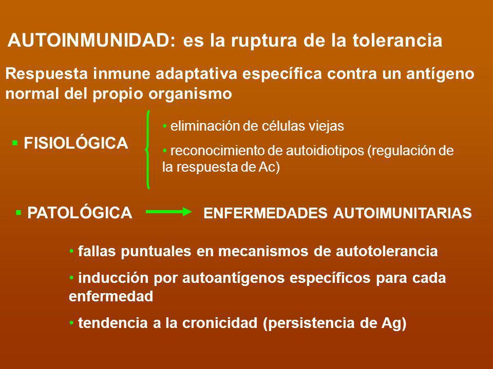 AUTOINMUNIDAD: es la ruptura de la tolerancia Respuesta inmune adaptativa específica contra un antígeno normal del propio organismo FISIOLÓGICA PATOLÓ