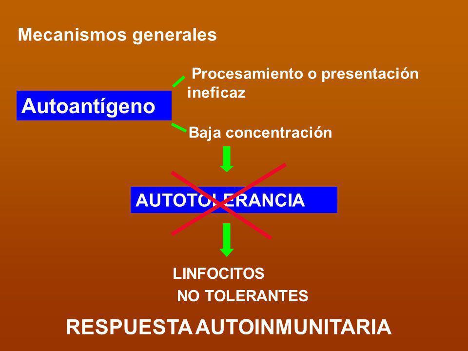 Mecanismos generales Procesamiento o presentación ineficaz Baja concentración AUTOTOLERANCIA LINFOCITOS NO TOLERANTES Autoantígeno RESPUESTA AUTOINMUN