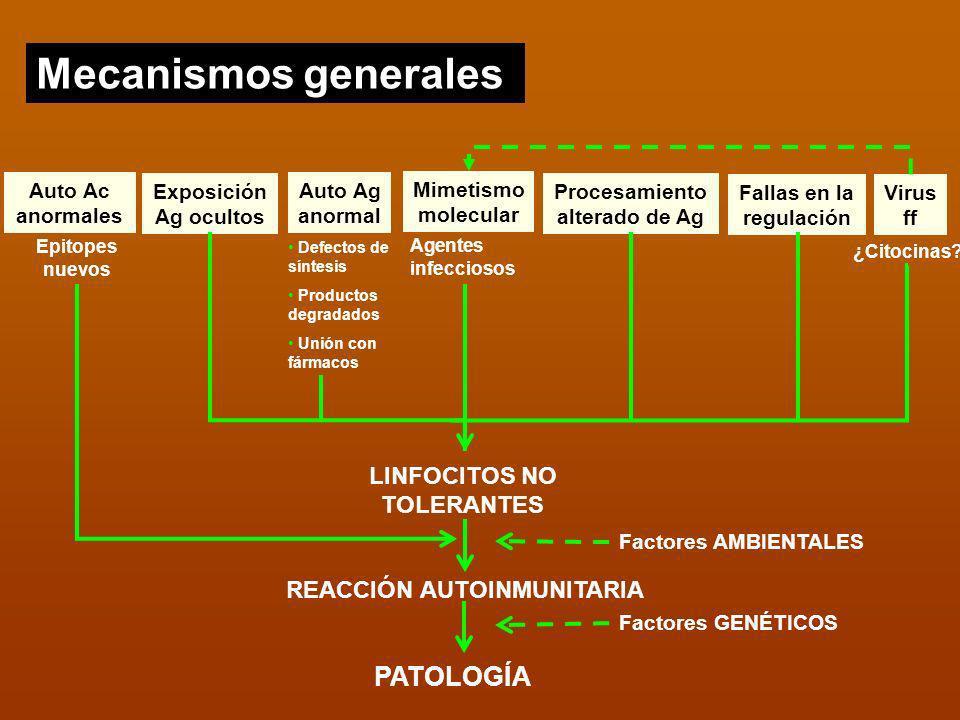 Mecanismos generales Auto Ac anormales Exposición Ag ocultos Auto Ag anormal Mimetismo molecular Procesamiento alterado de Ag Fallas en la regulación