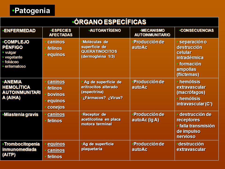 Patogenia CONSECUENCIASCONSECUENCIAS MECANISMO AUTOINMUNITARIOMECANISMO AUTOINMUNITARIO AUTOANTÍGENOAUTOANTÍGENO ESPECIES AFECTADASESPECIES AFECTADAS