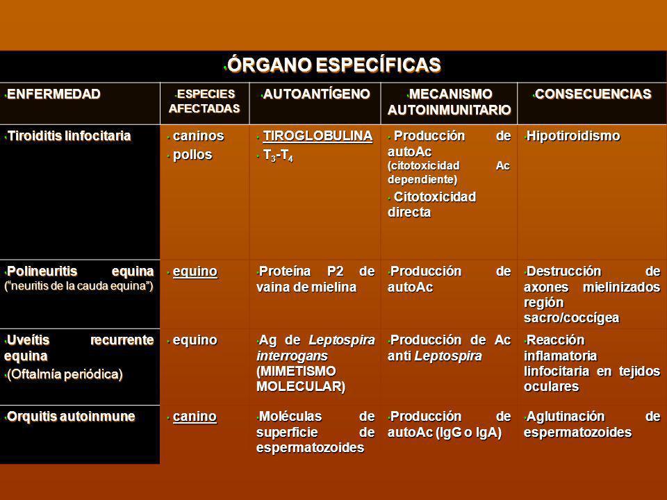 ENFERMEDAD ENFERMEDAD ESPECIES AFECTADAS ESPECIES AFECTADAS AUTOANTÍGENO AUTOANTÍGENO MECANISMO AUTOINMUNITARIO MECANISMO AUTOINMUNITARIO CONSECUENCIA