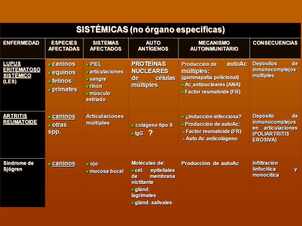 SISTÉMICAS (no órgano específicas) ENFERMEDAD ESPECIES AFECTADAS SISTEMAS AFECTADOS AUTO ANTÍGENOS MECANISMO AUTOINMUNITARIO CONSECUENCIAS LUPUS ERITE