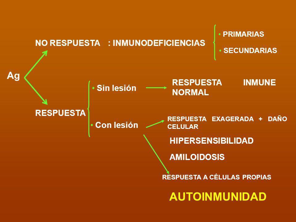 Mecanismos generales Procesamiento o presentación ineficaz Baja concentración AUTOTOLERANCIA LINFOCITOS NO TOLERANTES Autoantígeno RESPUESTA AUTOINMUNITARIA