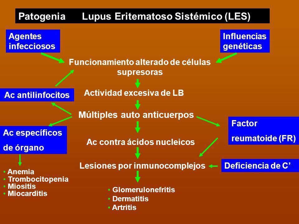 PatogeniaLupus Eritematoso Sistémico (LES) Funcionamiento alterado de células supresoras Agentes infecciosos Influencias genéticas Múltiples auto anti