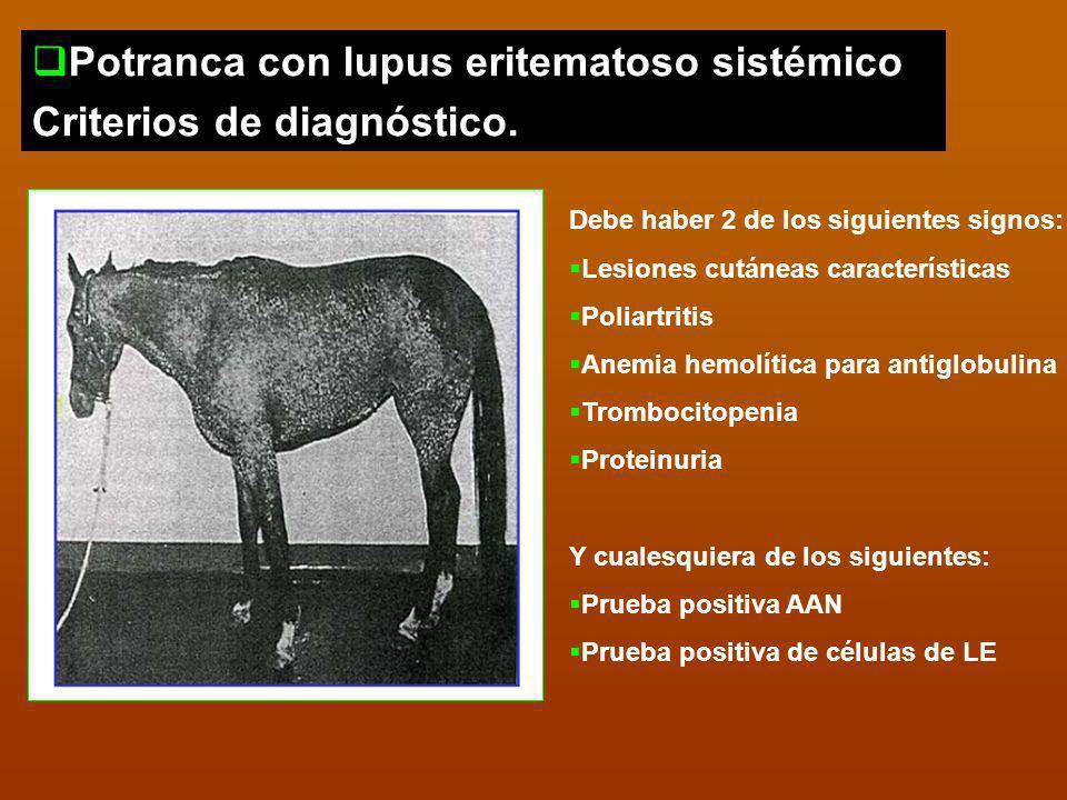 Potranca con lupus eritematoso sistémico Criterios de diagnóstico. Debe haber 2 de los siguientes signos: Lesiones cutáneas características Poliartrit