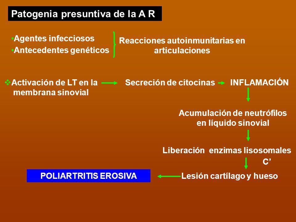 Reacciones autoinmunitarias en articulaciones Agentes infecciosos Antecedentes genéticos Activación de LT en la membrana sinovial Secreción de citocin