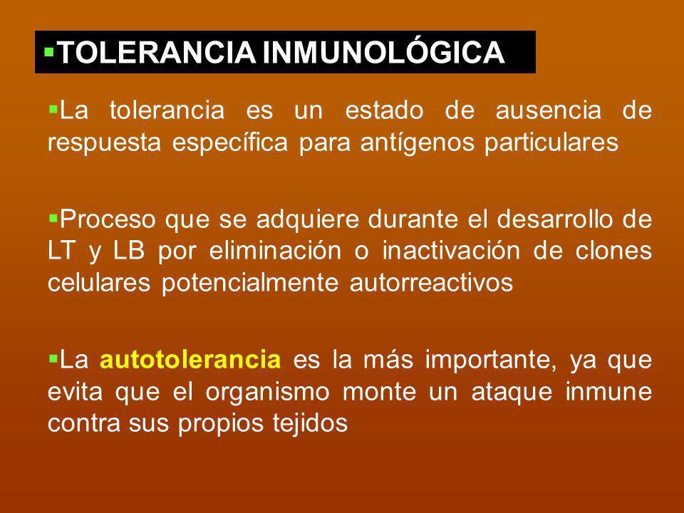 La tolerancia es un estado de ausencia de respuesta específica para antígenos particulares Proceso que se adquiere durante el desarrollo de LT y LB po