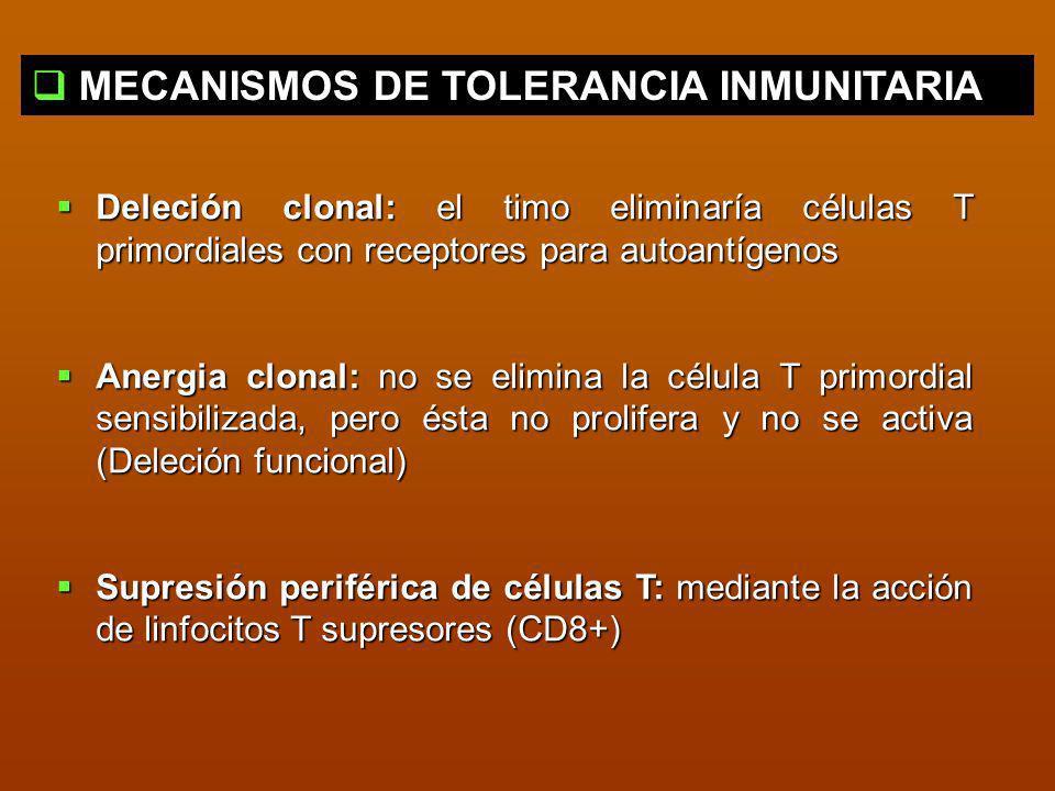 MECANISMOS DE TOLERANCIA INMUNITARIA Deleción clonal: el timo eliminaría células T primordiales con receptores para autoantígenos Deleción clonal: el
