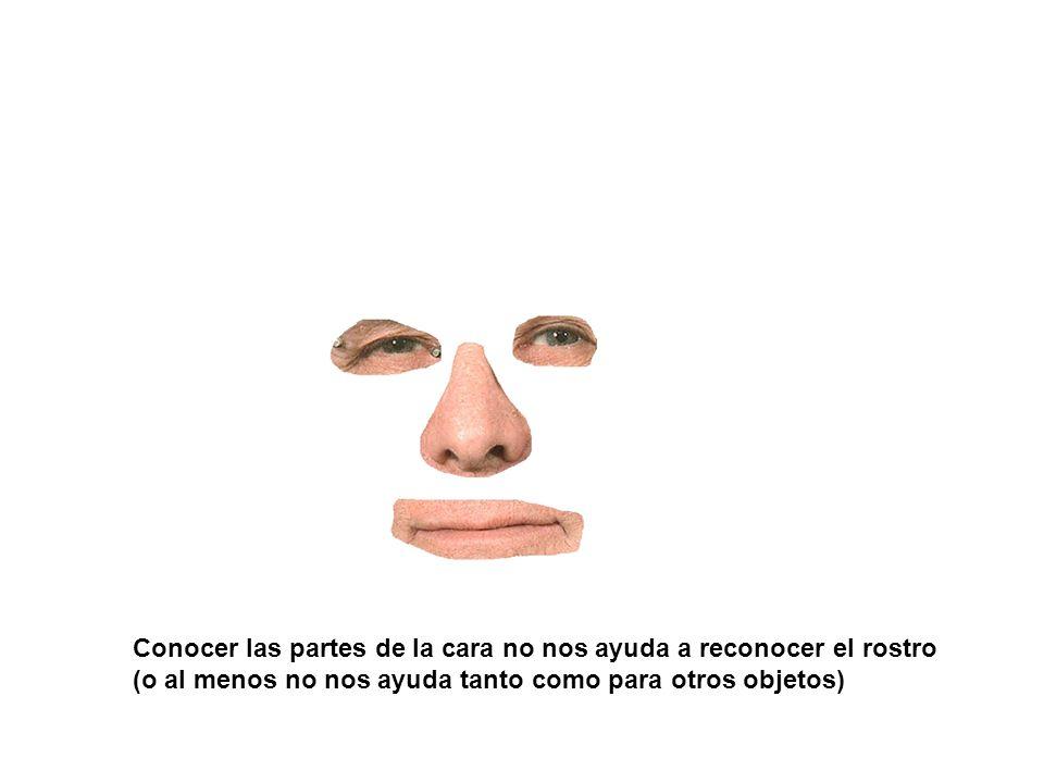 Conocer las partes de la cara no nos ayuda a reconocer el rostro (o al menos no nos ayuda tanto como para otros objetos)